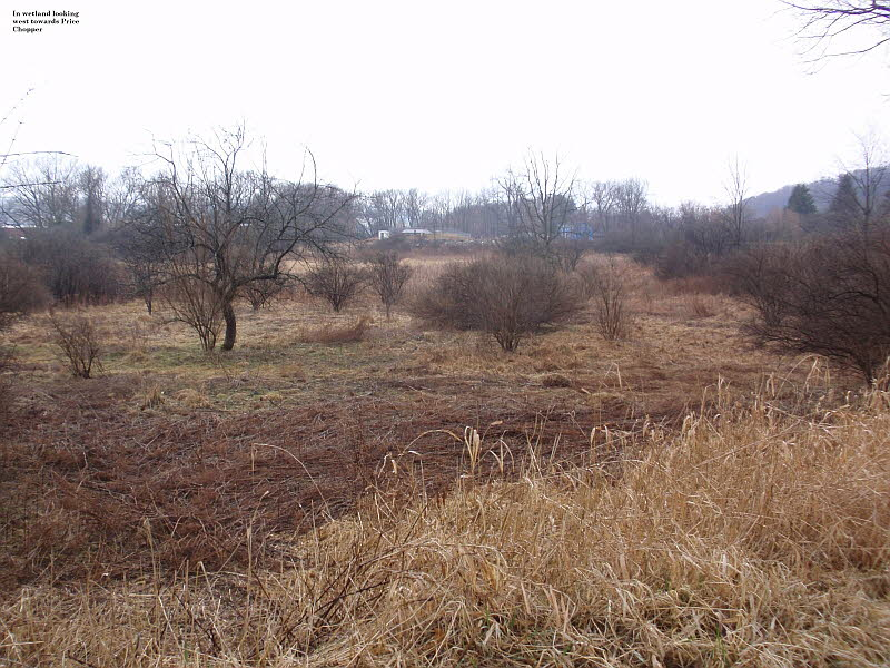 wetland looking west where trees were planted 2